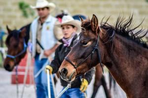La Pineta dei Cavalli
